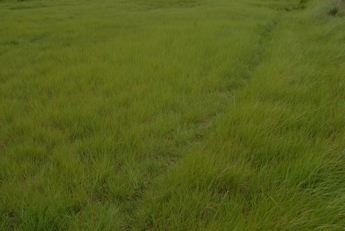 herbes foulées