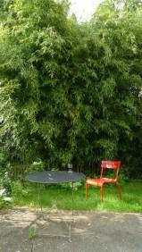 the house's bambou garden
